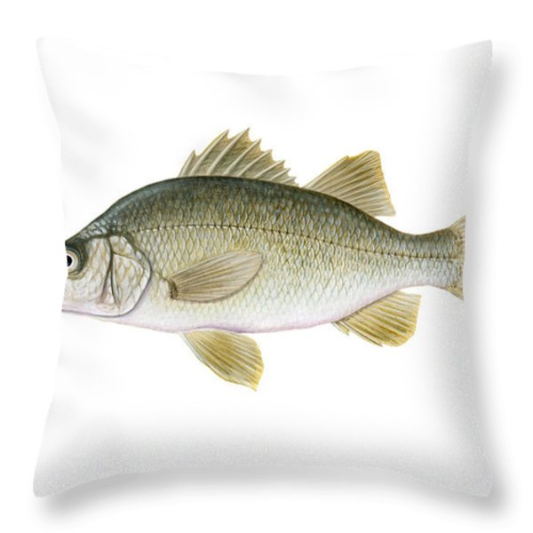 Illustration Of A White Perch Morone Throw Pillow by Carlyn Iverson
