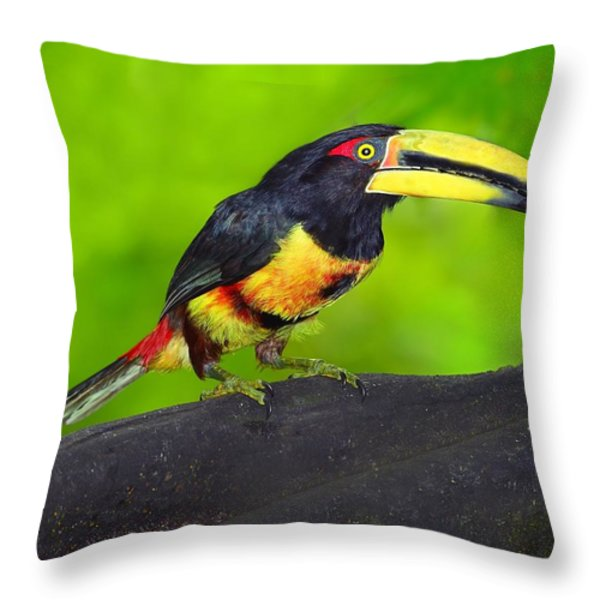 In The Forest Throw Pillow by Tony Beck