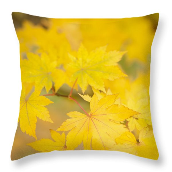 Intensely Yellow Throw Pillow by Anne Gilbert