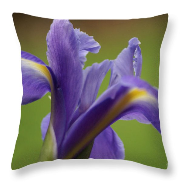 Iris 3 Throw Pillow by Carol Lynch