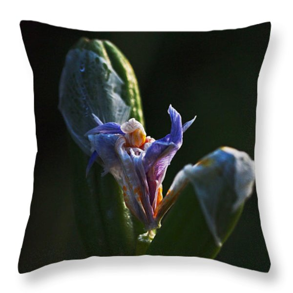 Iris Emerging  Throw Pillow by Rona Black