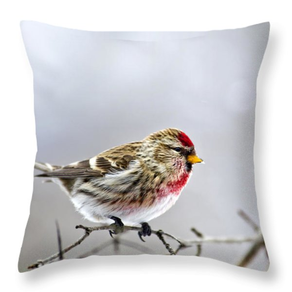 Irruptive Bird Common Redpoll Throw Pillow by Christina Rollo