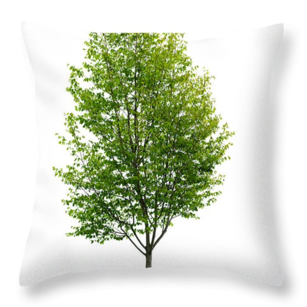 Isolated young tree Throw Pillow by Elena Elisseeva