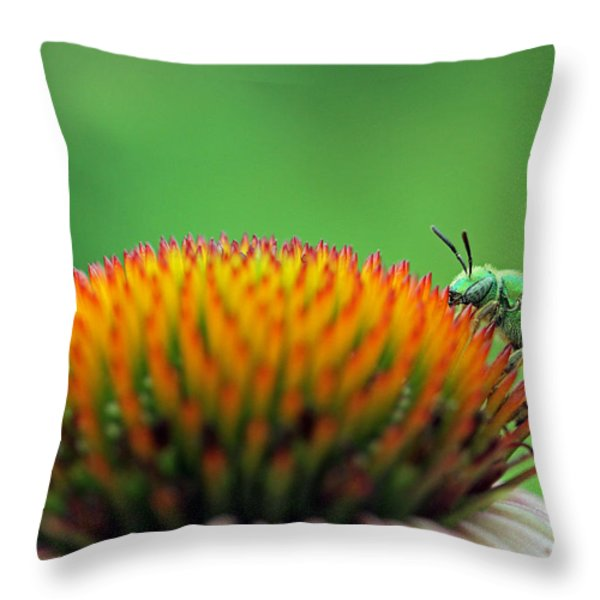 It Is A Hard Knock Life  Throw Pillow by Juergen Roth