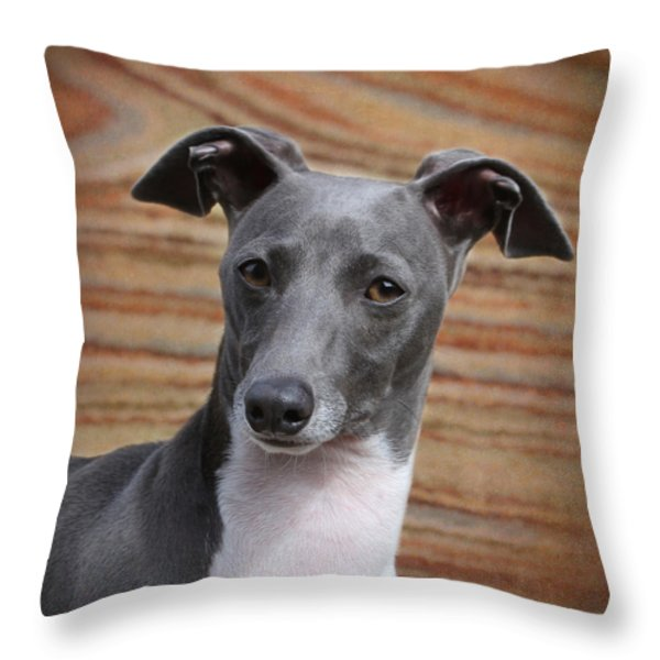 Italian Greyhound Throw Pillow by Angie Vogel
