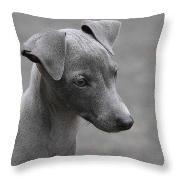 Italian Greyhound Puppy Throw Pillow by Angie Vogel