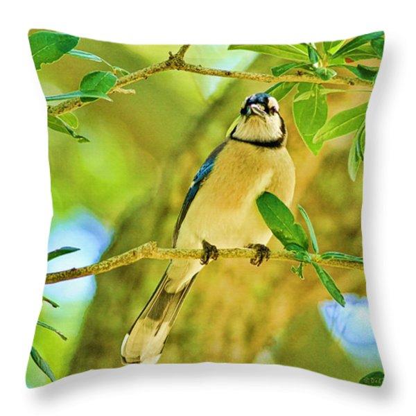 Jay In The Tree Throw Pillow by Deborah Benoit
