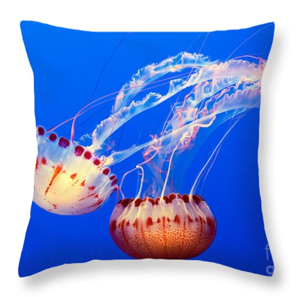 Jelly Dance - Large jellyfish Atlantic Sea Nettle Chrysaora quinquecirrha. Throw Pillow by Jamie Pham