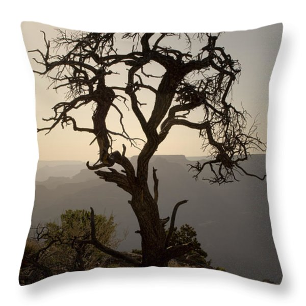 Juniper Tree at Grand Canyon Throw Pillow by David Gordon