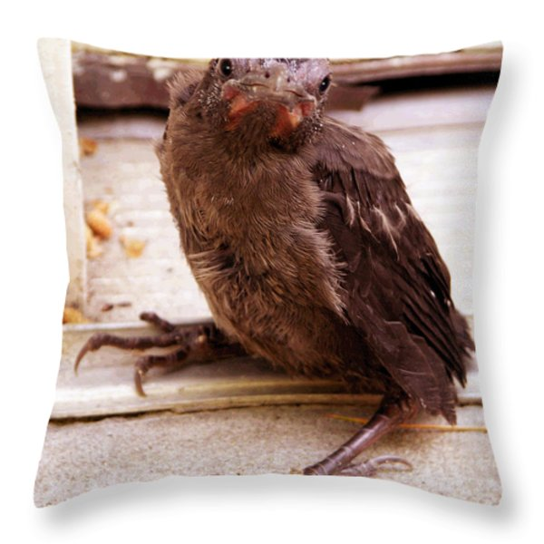 Just Dropped By Throw Pillow by John Lautermilch