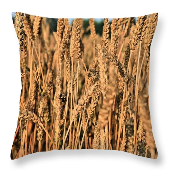 Just Wheat  Throw Pillow by JC Findley