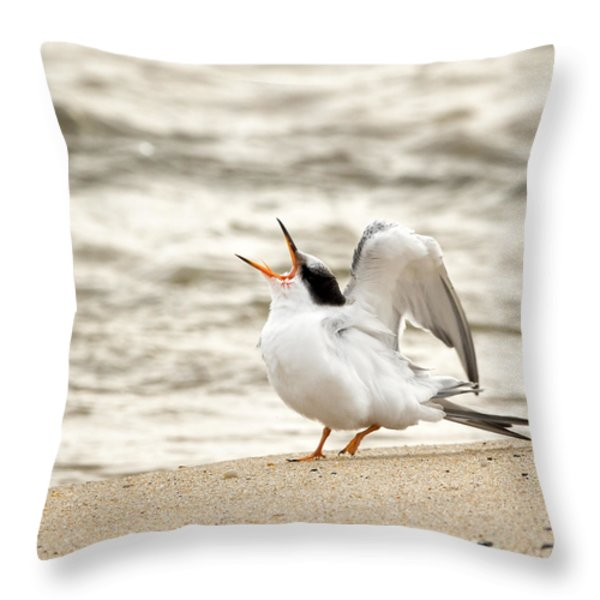 Juvenile Common Tern Square Throw Pillow by Bill  Wakeley
