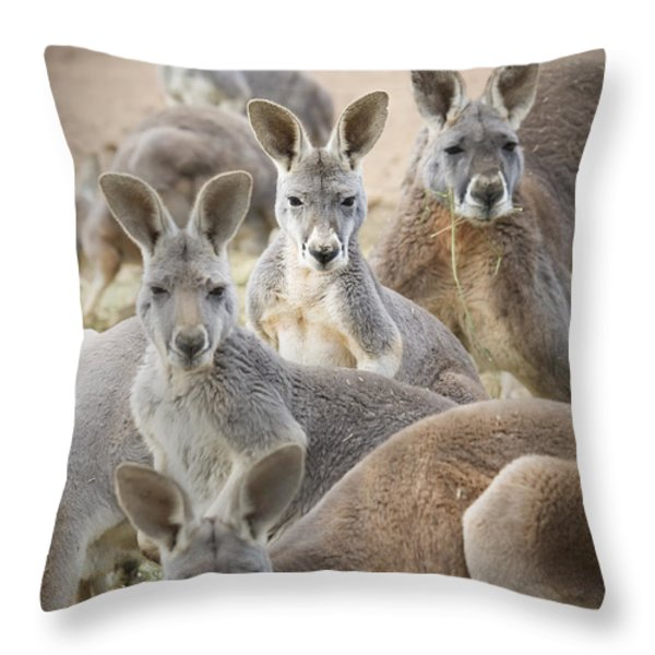 Kangaroos Waga Waga Australia Throw Pillow by Jim Julien