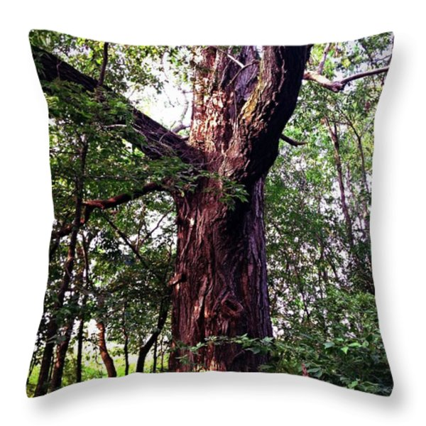 King Of The Timberline Throw Pillow by Garren Zanker