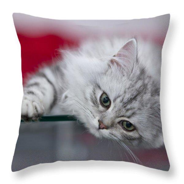 Kitten Throw Pillow by Melanie Viola