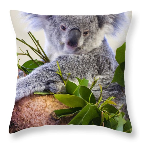 Koala On Top Of A Tree Throw Pillow by Chris Flees