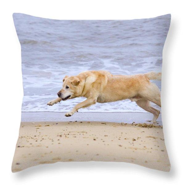 Labrador Dog Chasing Ball On Beach Throw Pillow by Geoff du Feu