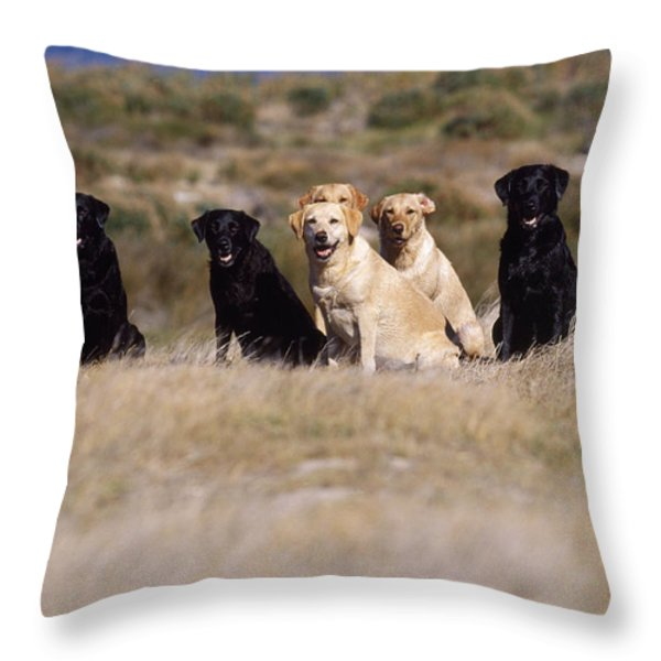 Labrador Dogs Waiting For Orders Throw Pillow by Chris Harvey