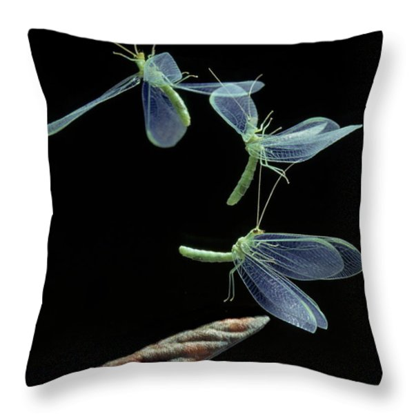 Lacewing Taking Off Throw Pillow by Stephen Dalton