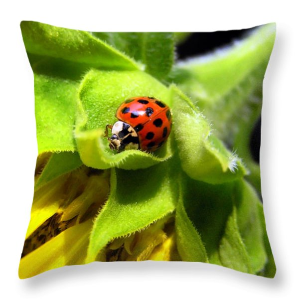 Lady Beetle Throw Pillow by Christina Rollo