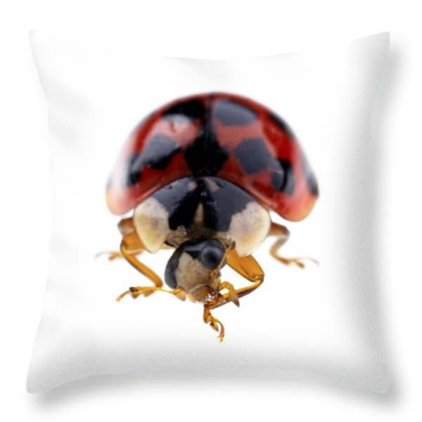 Ladybird macro Throw Pillow by Jane Rix