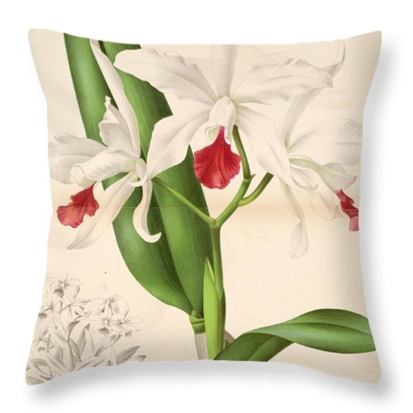 Laelia Elegans Throw Pillow by Philip Ralley