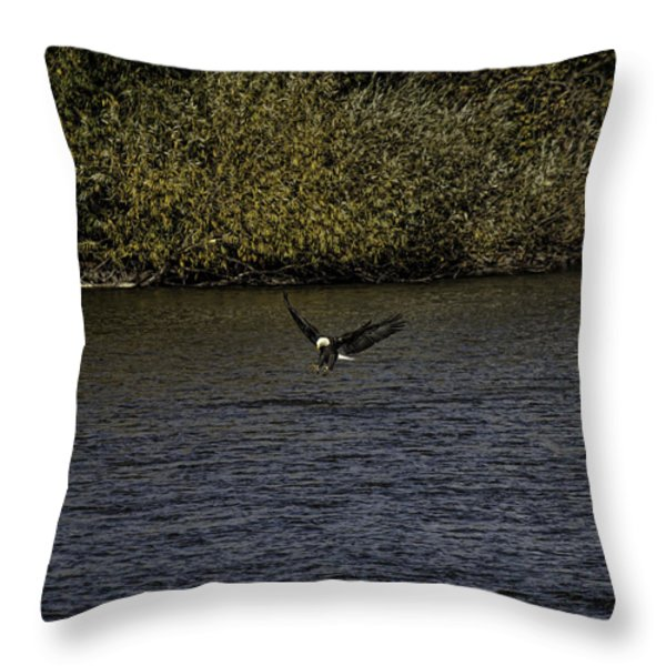 Landing Eagle Throw Pillow by Thomas Young