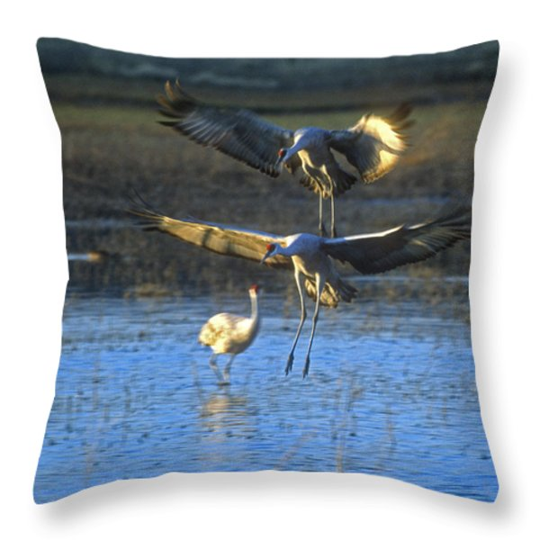 Landing sandhill cranes Throw Pillow by Steven Ralser