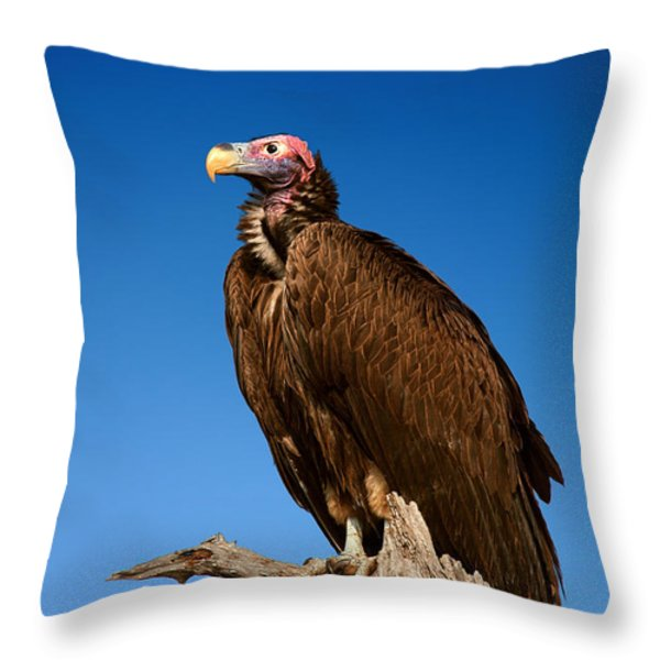 Lappetfaced Vulture Against Blue Sky Throw Pillow by Johan Swanepoel