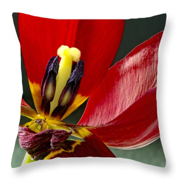 Last Days Throw Pillow by Sharon  Talson