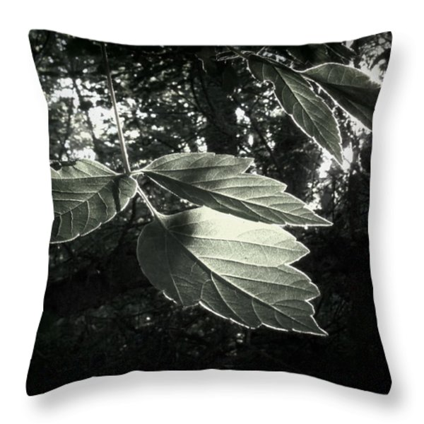 Last Rays II Throw Pillow by Jessica Myscofski