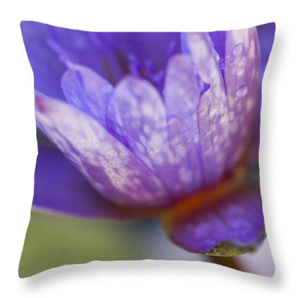 Late Afternoon Dream Throw Pillow by Priya Ghose