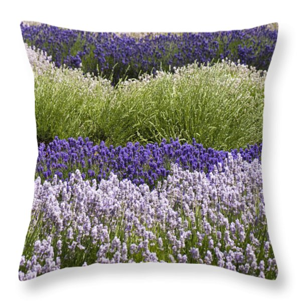 Lavender Bands Throw Pillow by Anne Gilbert