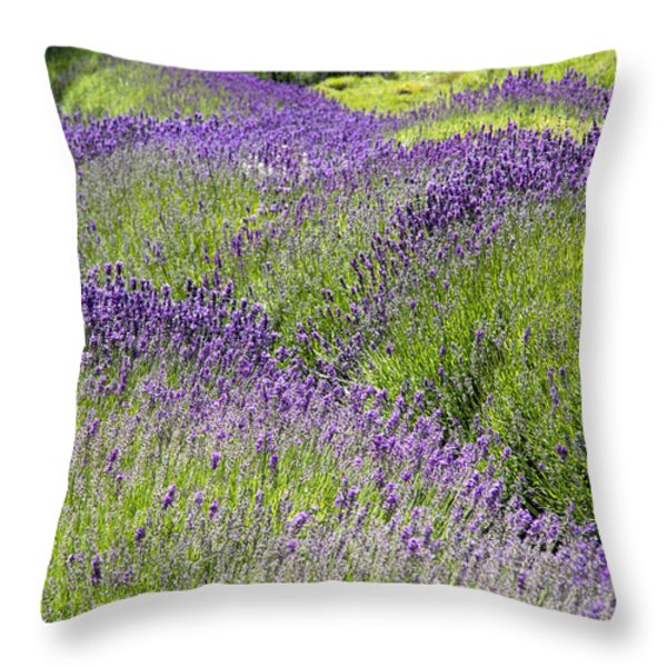 Lavender Day Throw Pillow by Kathy Bassett