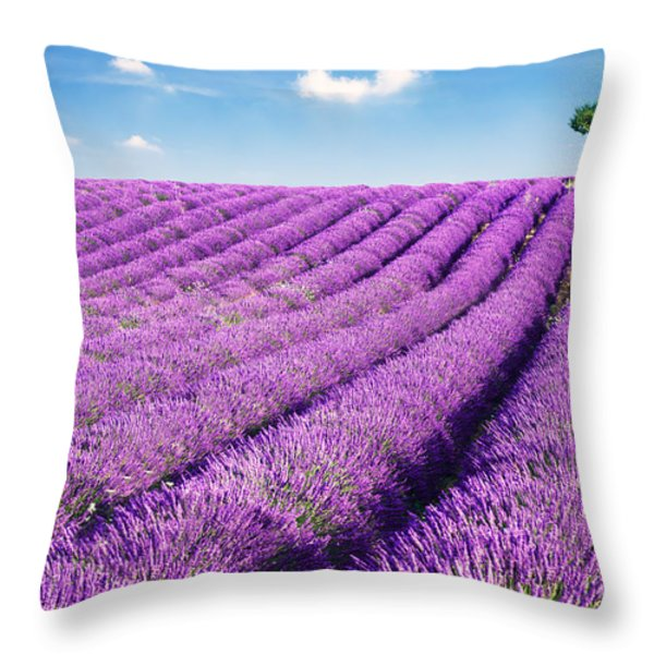 Lavender field and tree in summer Provence France. Throw Pillow by Matteo Colombo