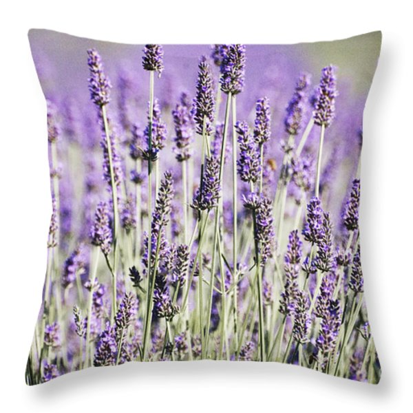 Lavender fields 2 Throw Pillow by Anahi DeCanio