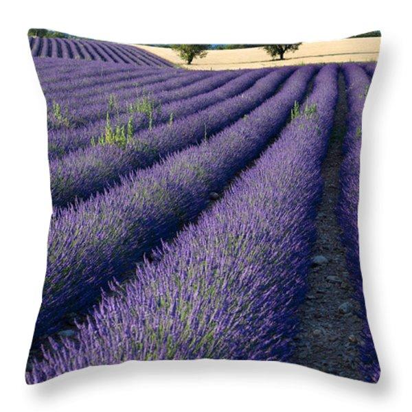 Lavender Fields Throw Pillow by Brian Jannsen