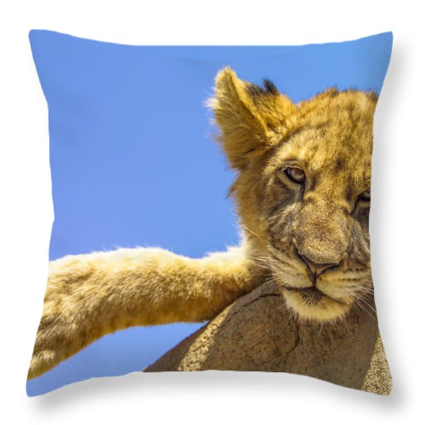 Lazy Lion Throw Pillow by Diane Diederich