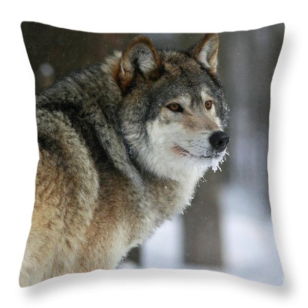Leader Of The Pack Throw Pillow by Inspired Nature Photography By Shelley Myke