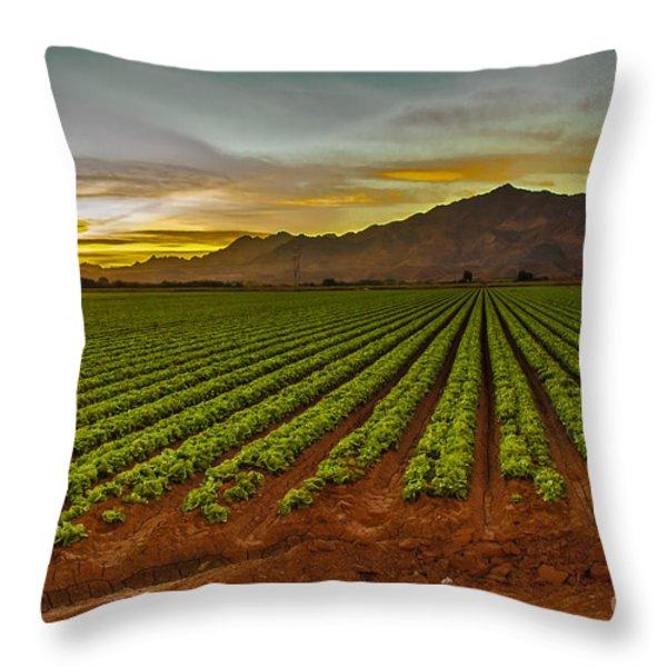 Lettuce Sunrise Throw Pillow by Robert Bales
