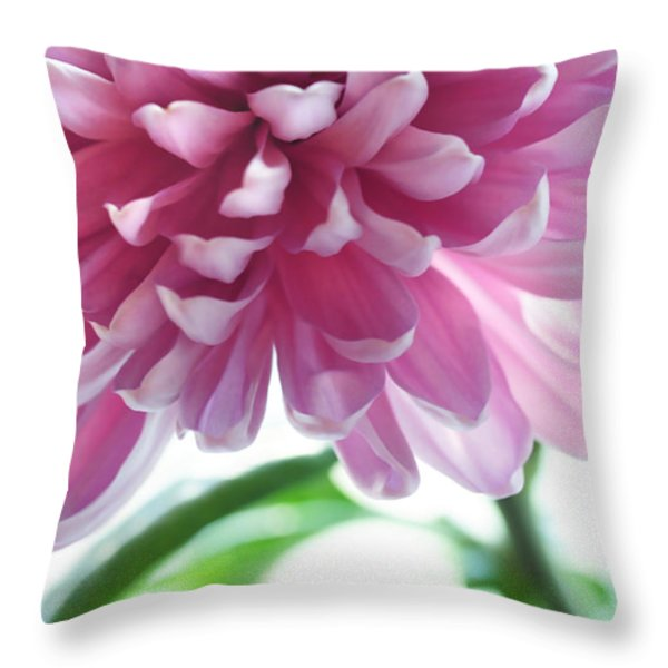 Light Impression. Pink Chrysanthemum  Throw Pillow by Jenny Rainbow