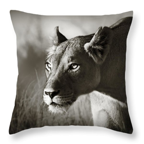 Lioness stalking Throw Pillow by Johan Swanepoel