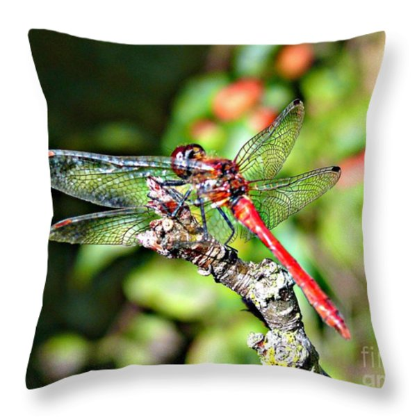 Little Dragonfly Throw Pillow by Morag Bates