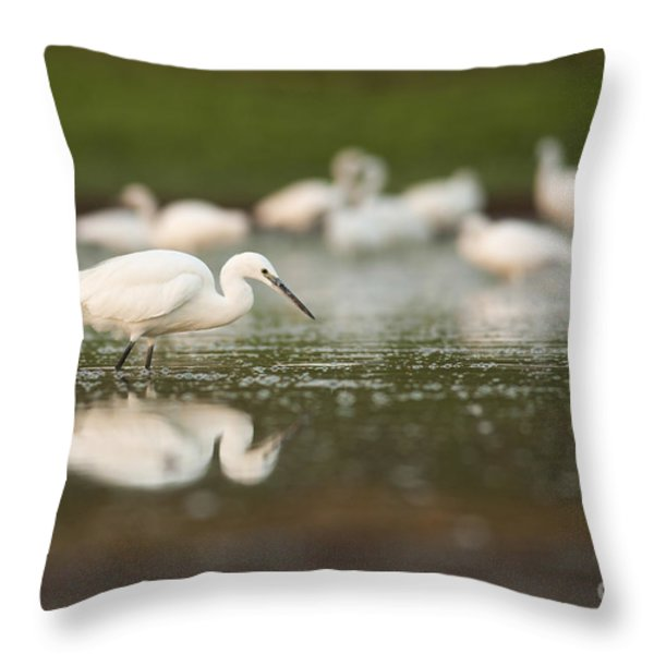 Little Egret Egretta Garzetta Throw Pillow by Alon Meir