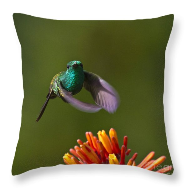 Little Hedgehopper Throw Pillow by Heiko Koehrer-Wagner