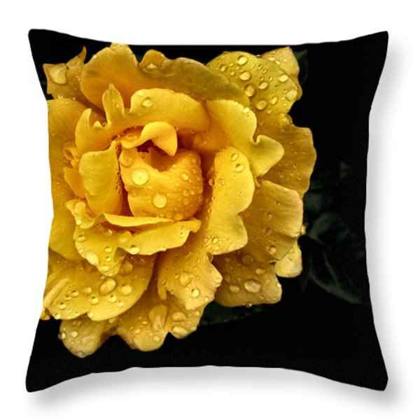 Lone Yellow Rose Throw Pillow by Stephanie Hollingsworth