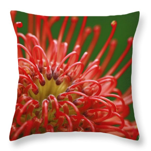 Look Inside Pincushion Flower Throw Pillow by Inspired Nature Photography Fine Art Photography