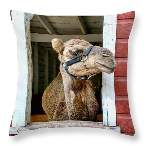 Look Left Throw Pillow by Nikolyn McDonald