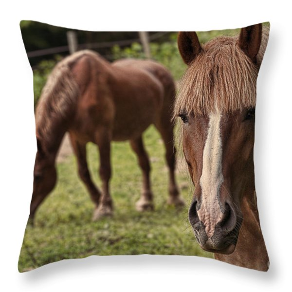 Looking At You Throw Pillow by Dan Friend