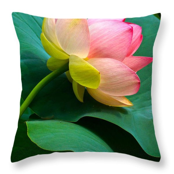 Lotus Blossom And Leaves Throw Pillow by Byron Varvarigos